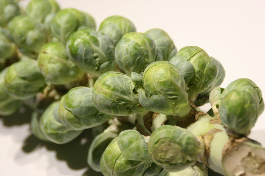 Sprouts on the Stalk