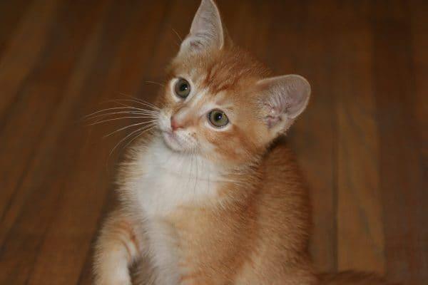 Bonus Kitten Picture