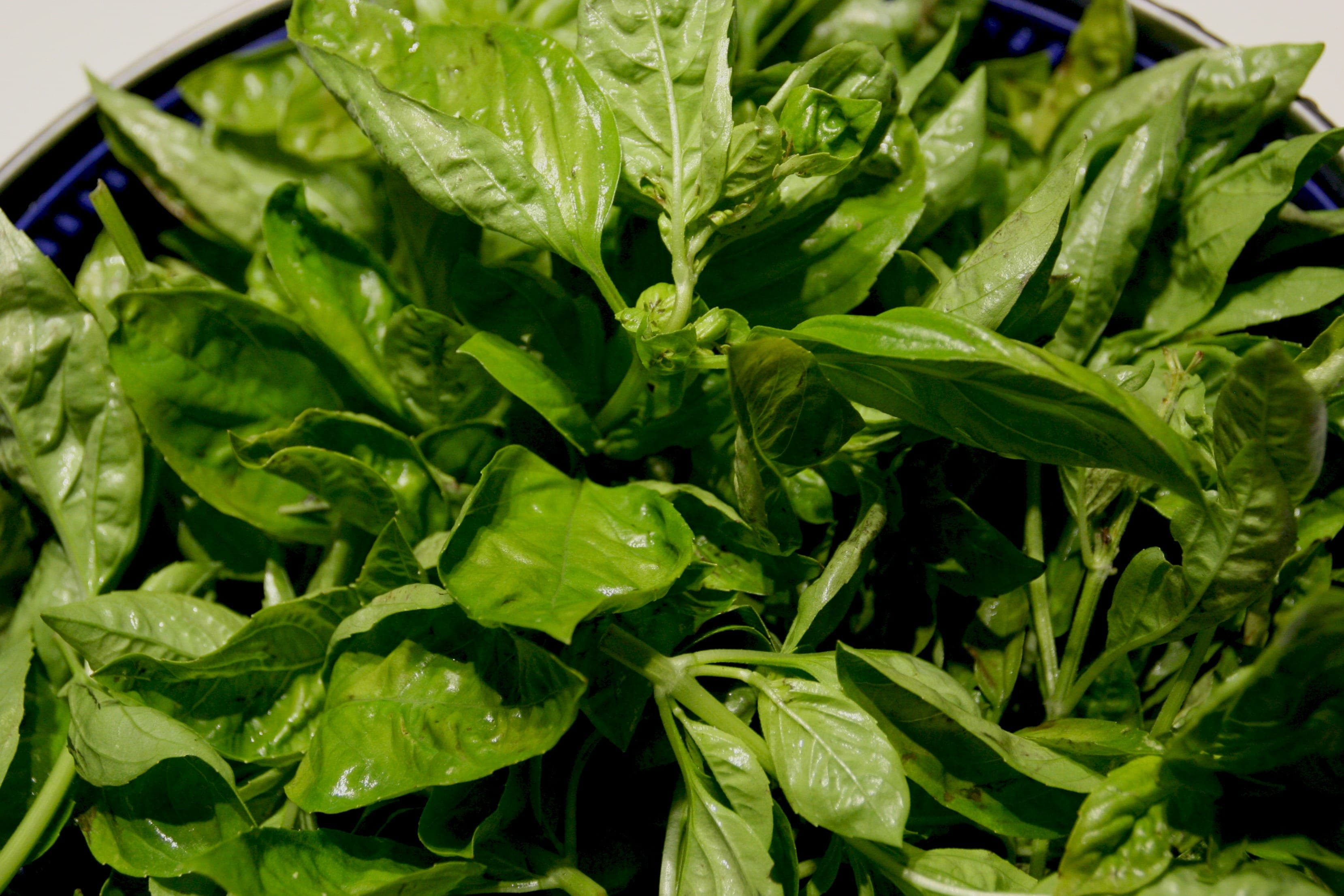 The BEST Way to Save Fresh Basil